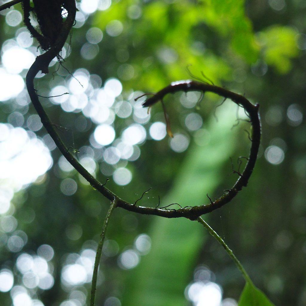 Tropische Schnörkel, Malaysia nach ©muellerinart