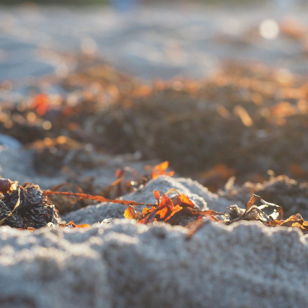 Algen am Ostseestrand ©muellerinartstudio